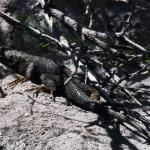 Lizard at Beaver Dam State Park