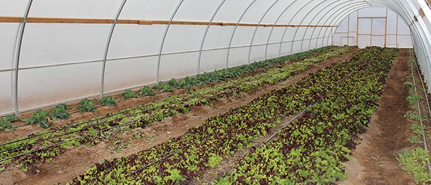 Blue Lizard Farm: Extending the growing season