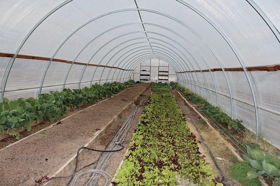 Blue Lizard Farm Taking Locally Grown to a Whole New Level