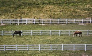 Horses graze in a pasture south of Alamo.