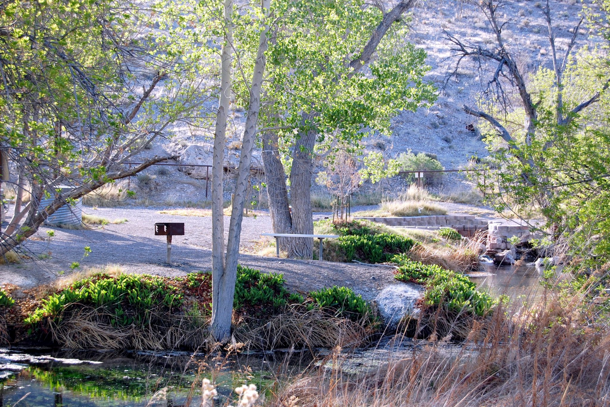 Local group hopes to redevelop Little Ash