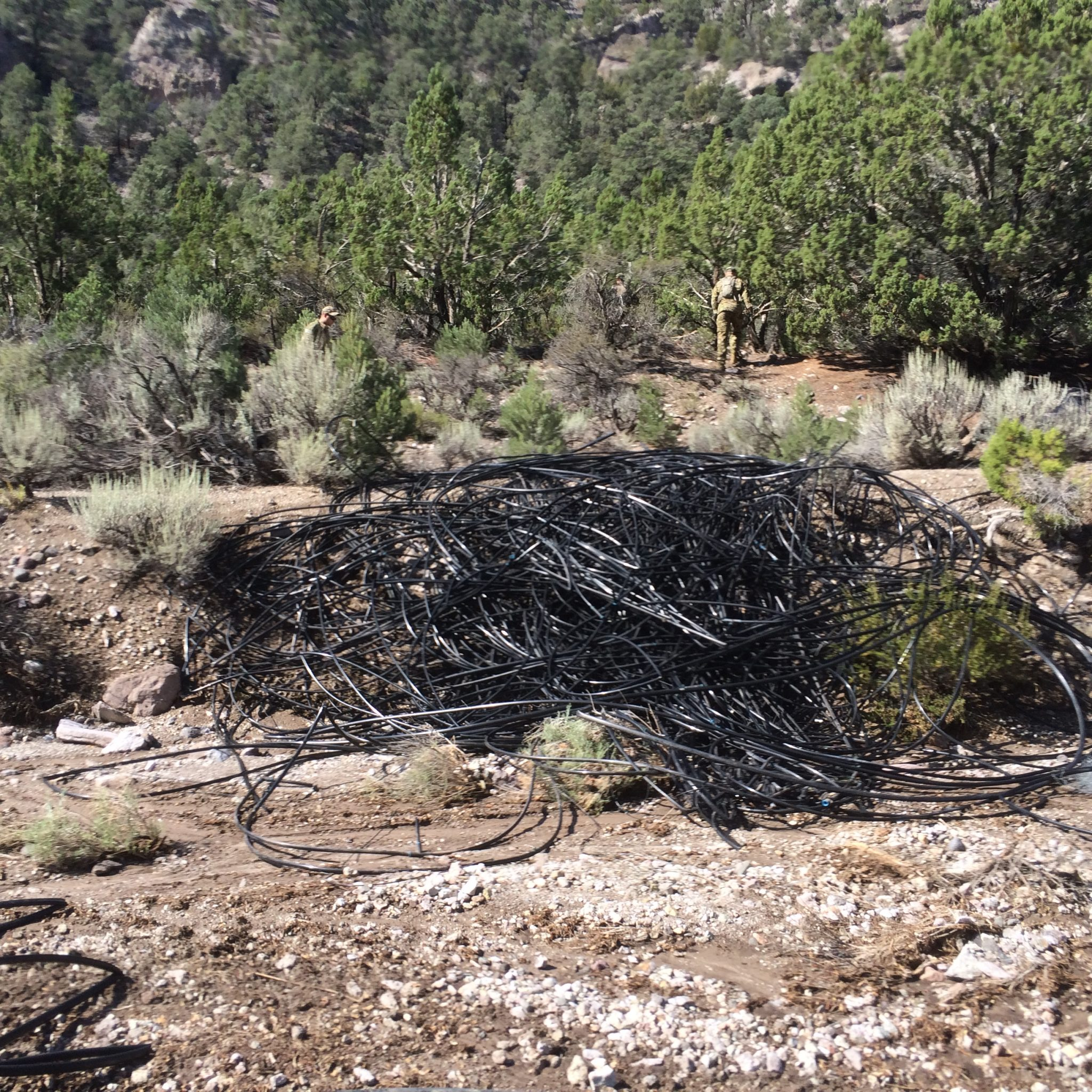 Authorities destroy large marijuana grow