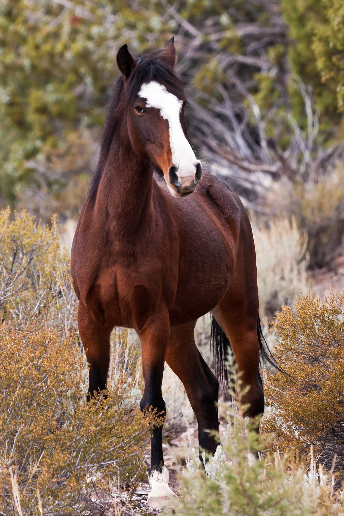 Wild horses becoming a problem in Lincoln County
