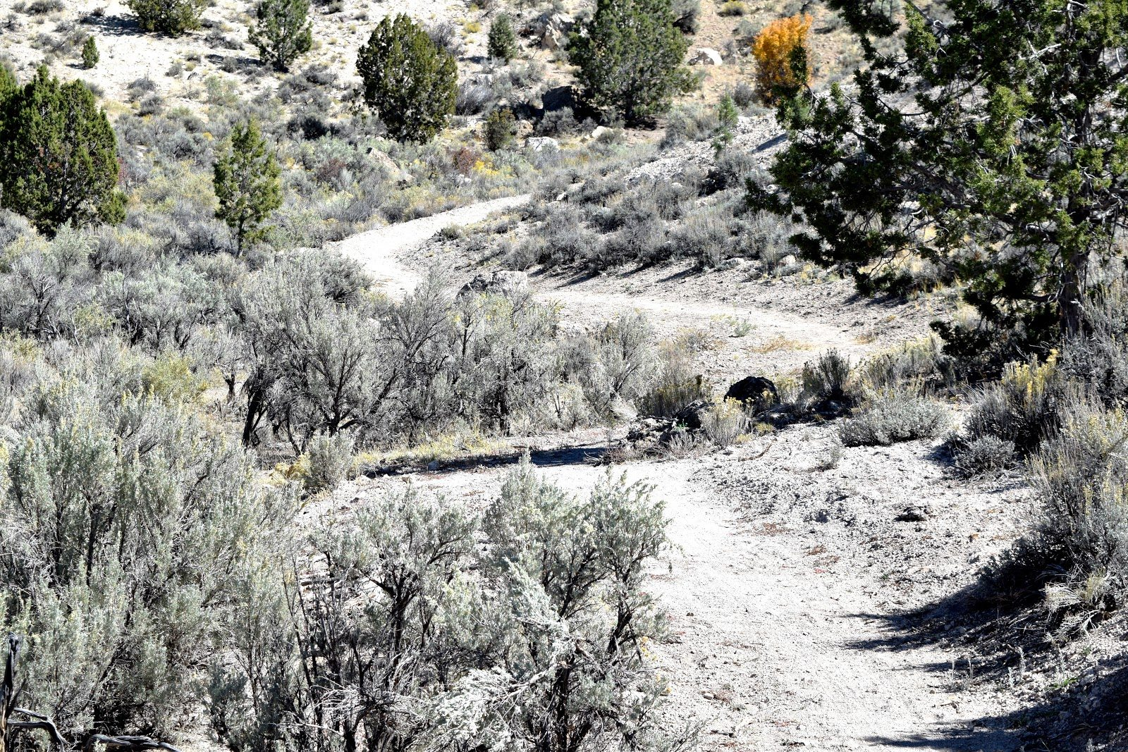 Mountain Bike Trails Advancing