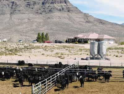 Hiko's KW Legacy Ranch celebrates Fifth Anniversary