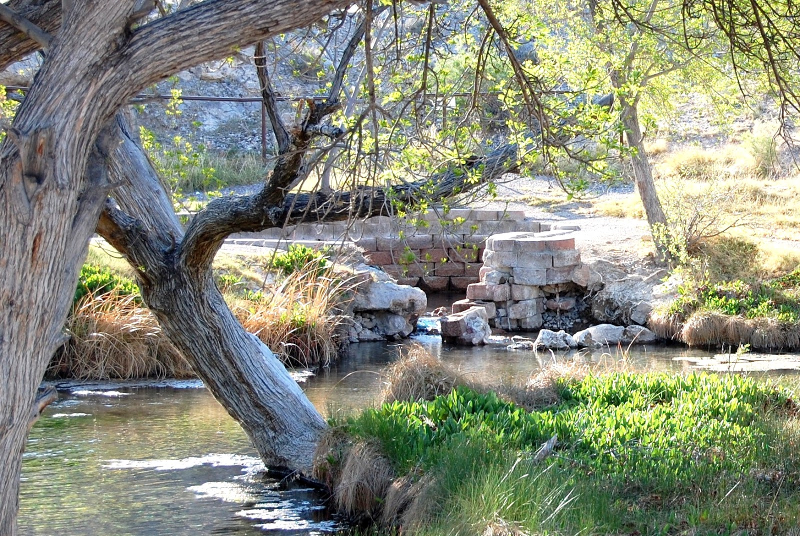 Ash Springs