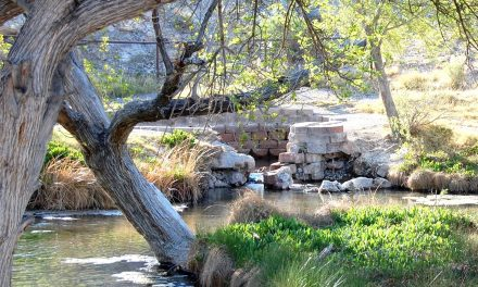 Preliminary Proposed Action Announced for Little Ash Springs
